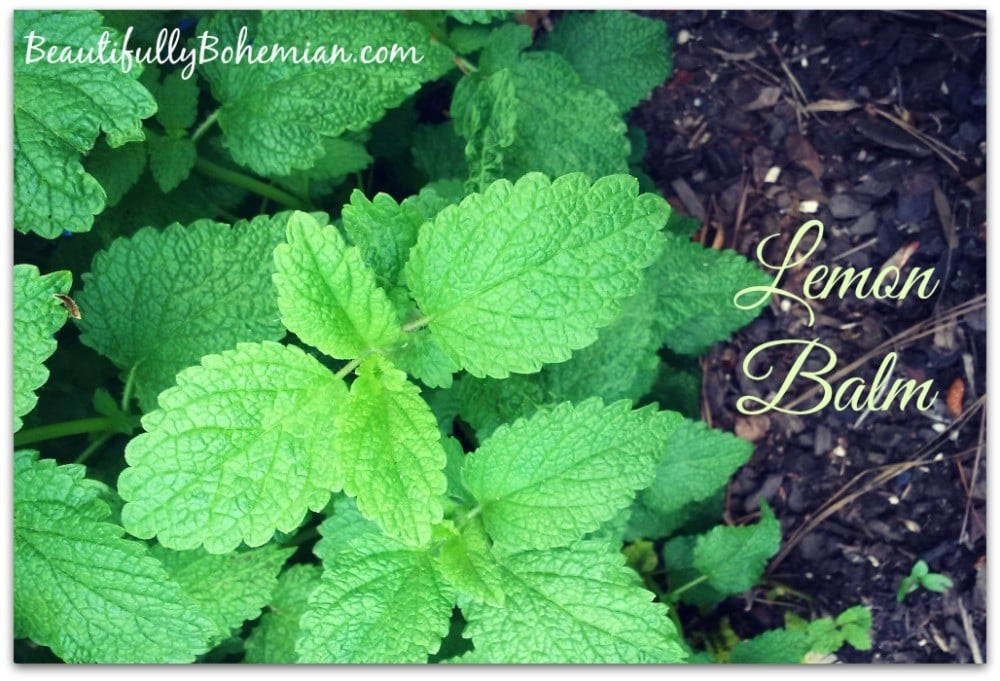 How you can heal with Lemon Balm!