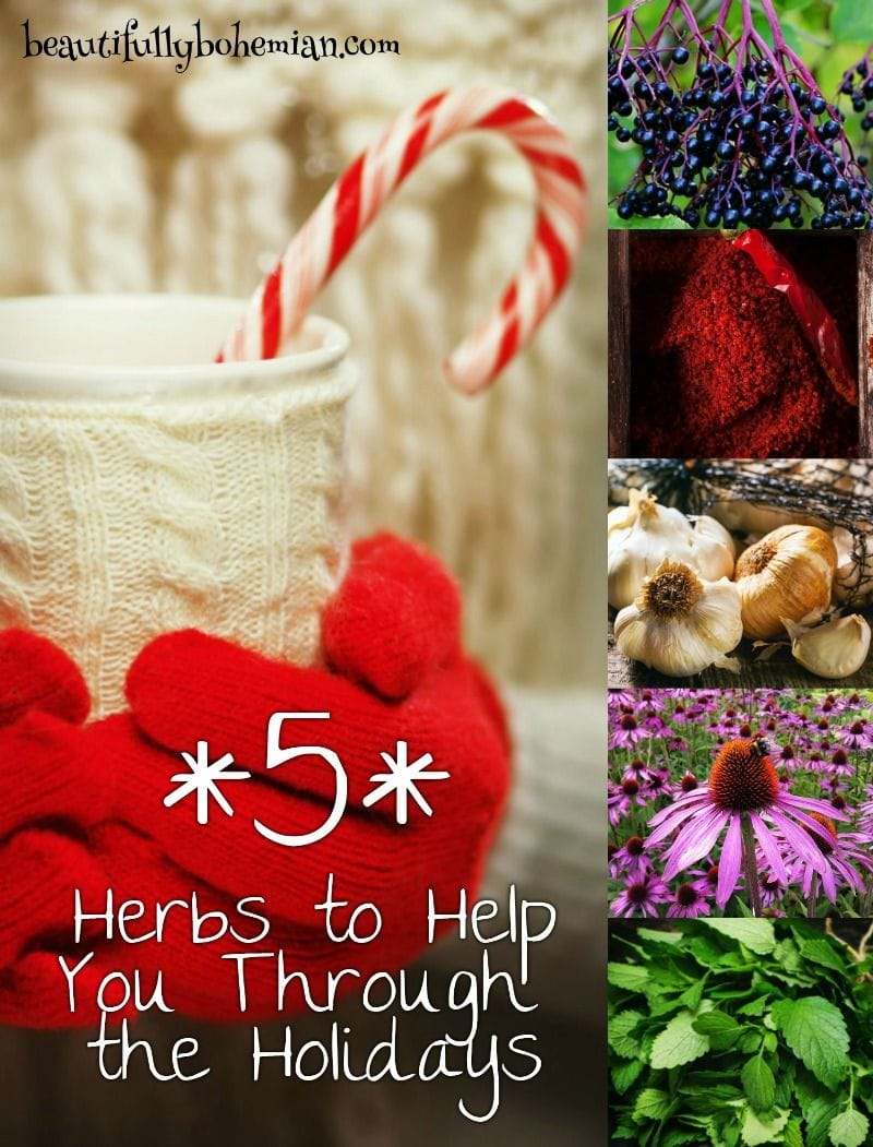 5-herbs-to-help-you-through-the-holidays_1