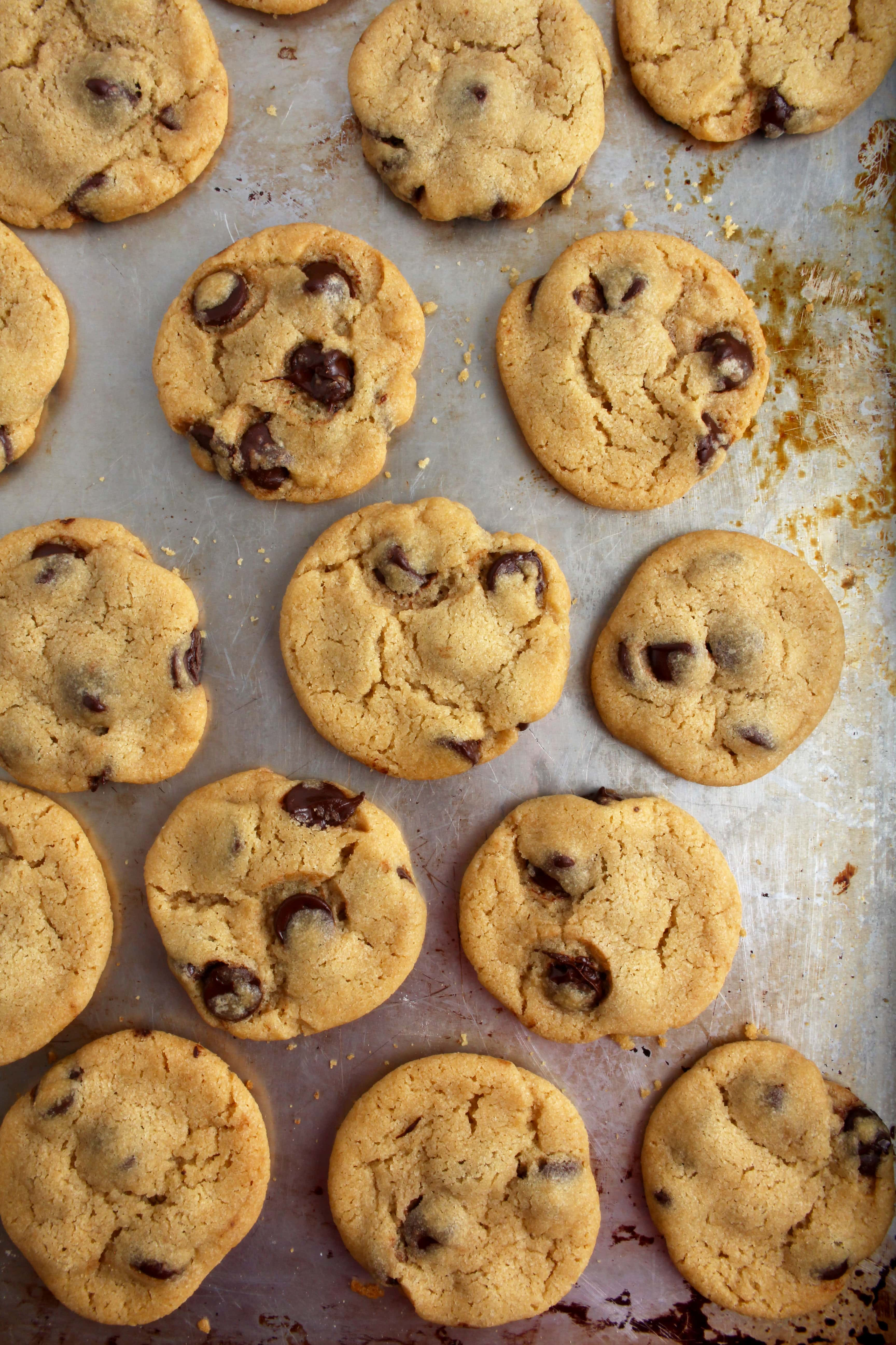 picture of vegan chocolate chip cookies on a baking tray