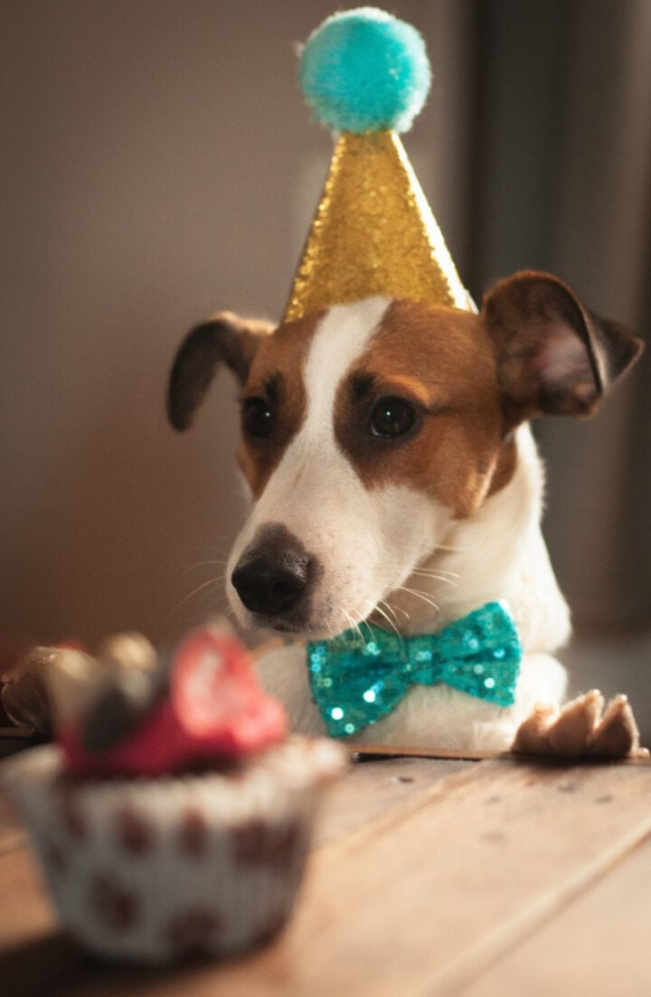 picture of a dog in a birthday hat